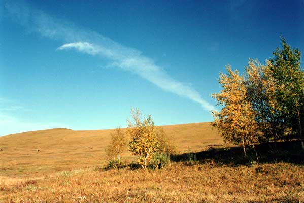 秋色麦子风景图片