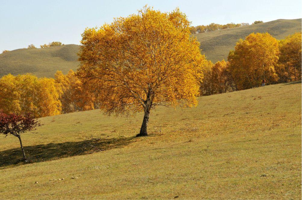多彩的乌兰布统-对塞罕坝红山军马场闪电游