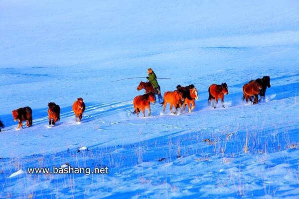 冬季马群 牧马人