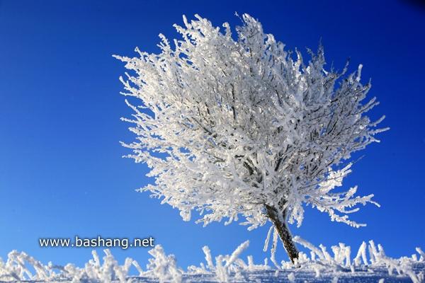 冰雪坝上美景