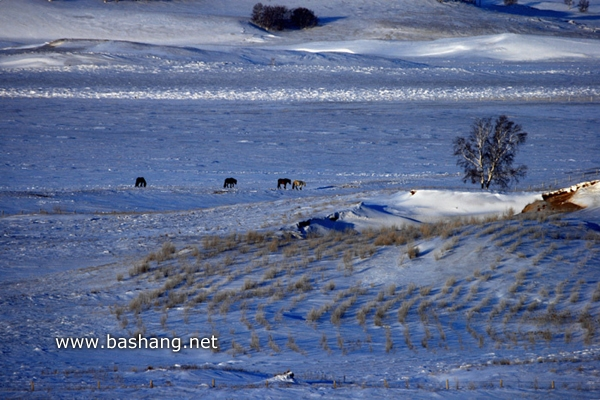 冬季乡村一景