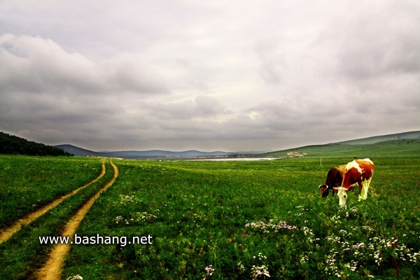 木兰围场之夏 坝上美景