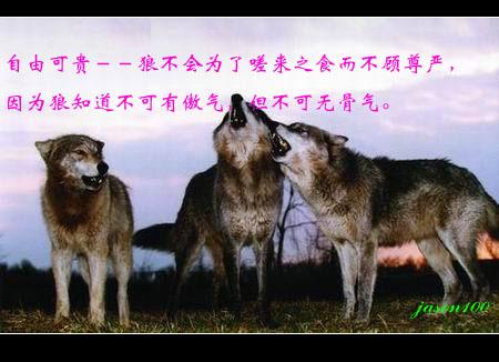 蒙古民族的图腾崇拜