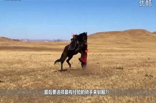 视频:坝上 驯服烈马
