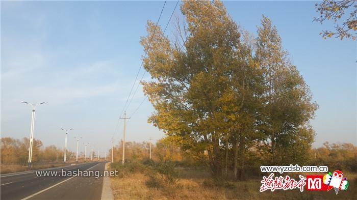 河北坝上150万亩防护林枯死 林业局:自然衰亡