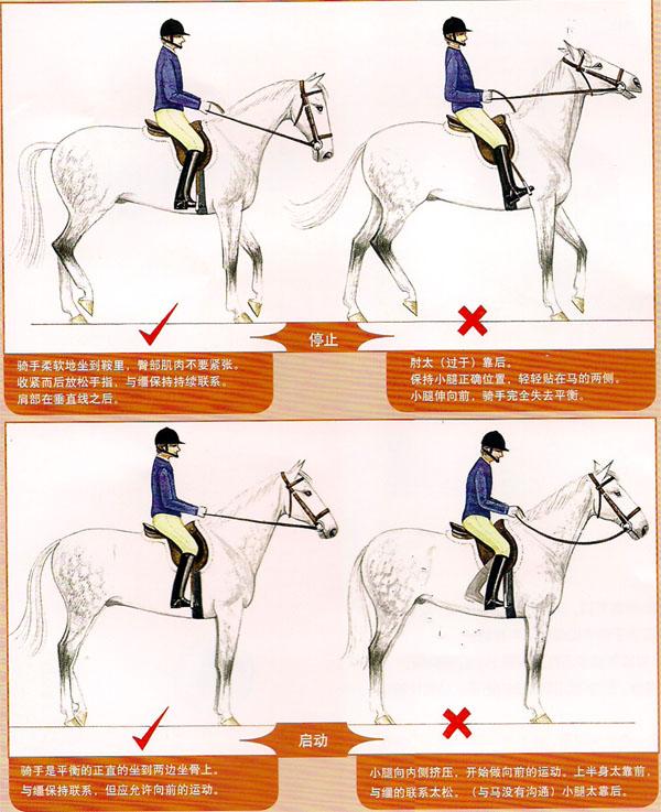 骑手的辅助--初学骑手的基本辅助