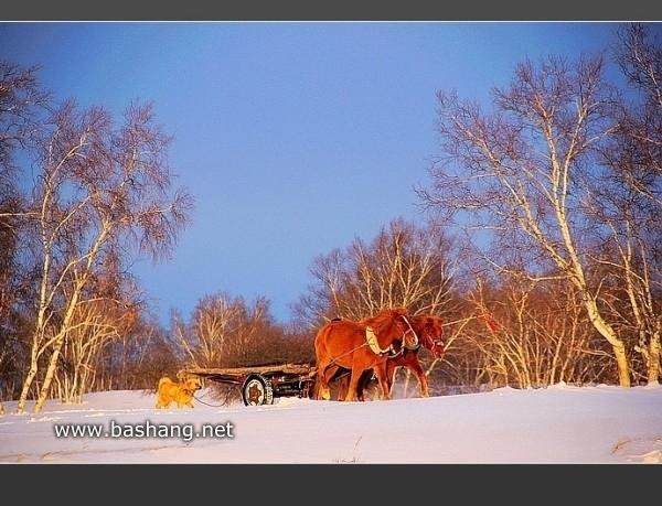 坝上光影,画里的雪国