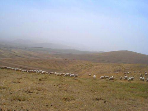 五月坝上草原
