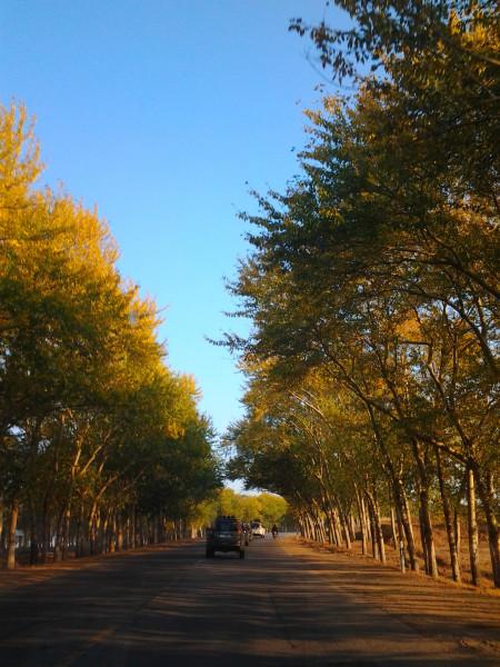 丰宁坝上景点图片