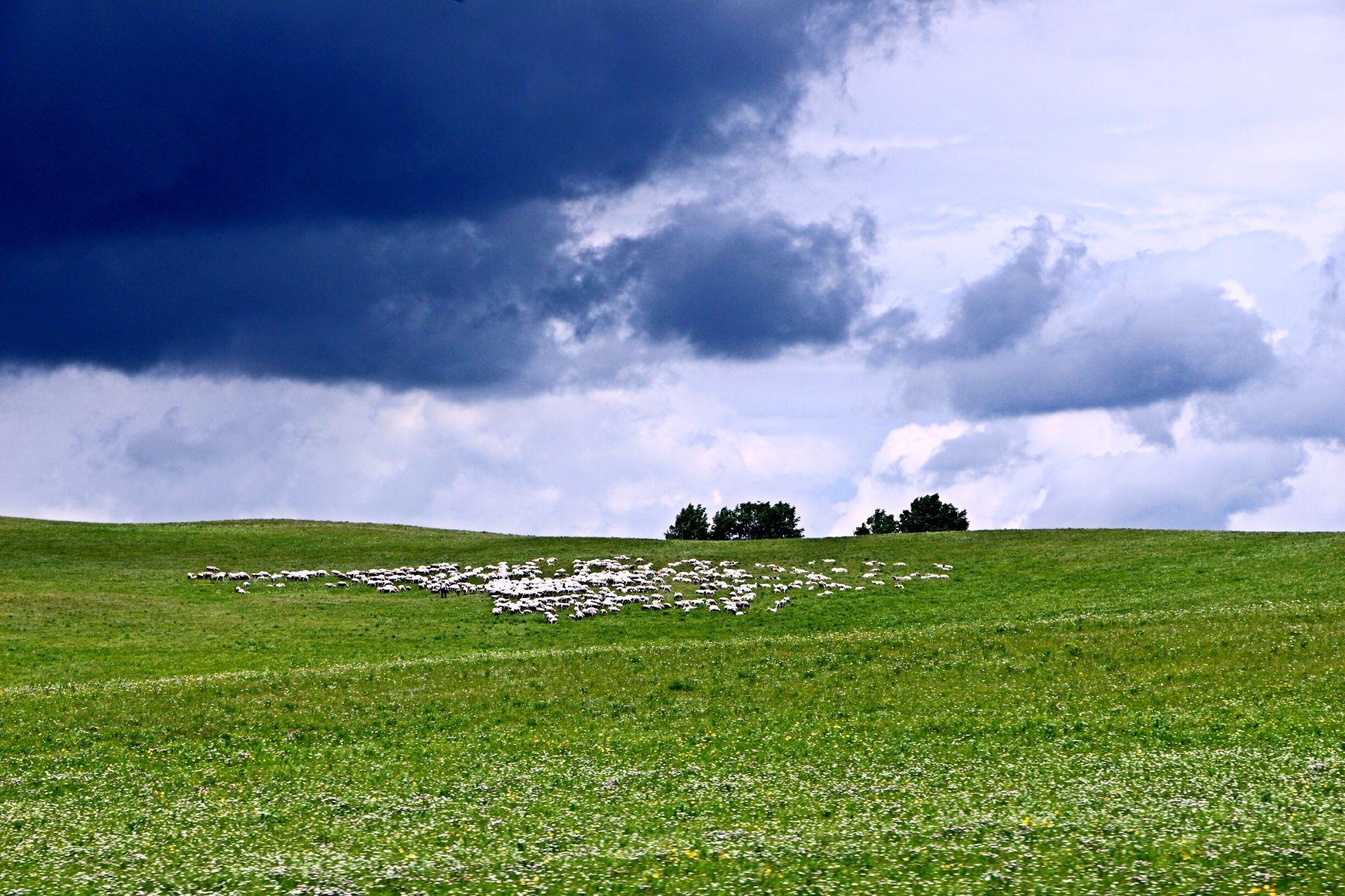 木兰围场+乌兰布统:我就在这里,等风也等你