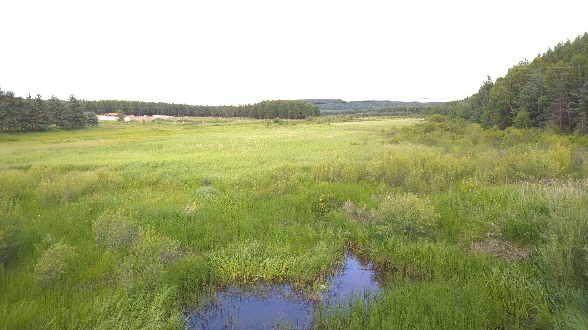 夏日,两人一狗的木兰围场之旅