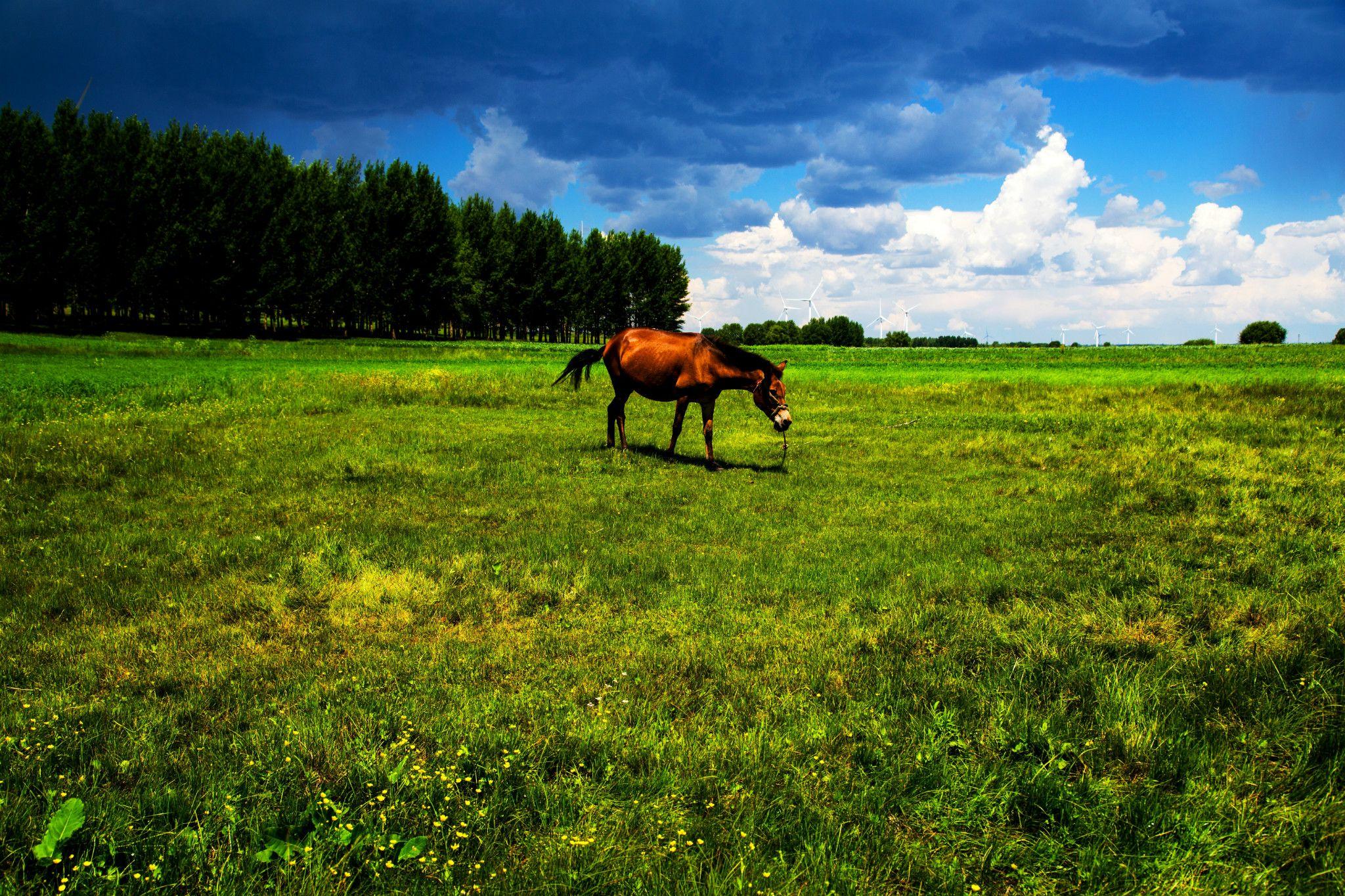 最美时节穿行草沿天路, 沽源观滦河神韵