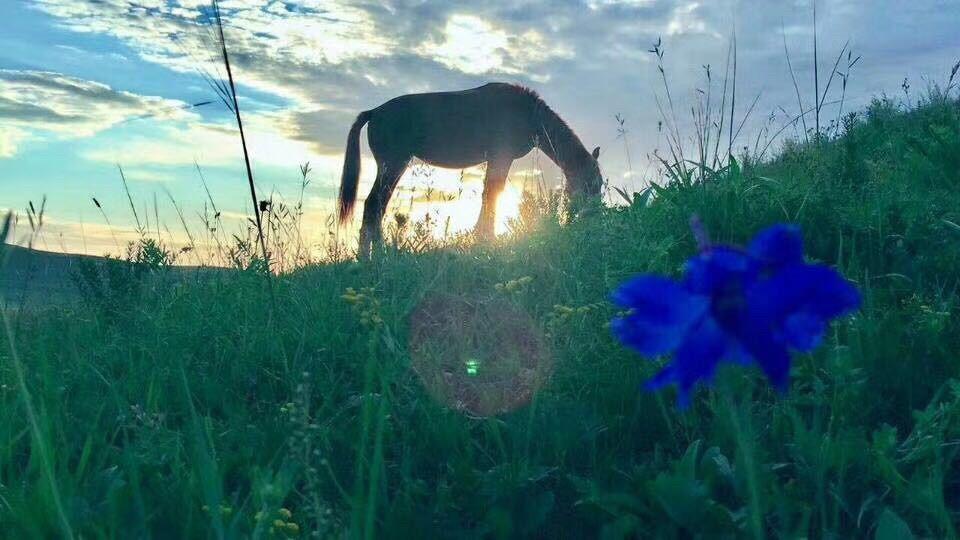 坝上草原——全家总动员