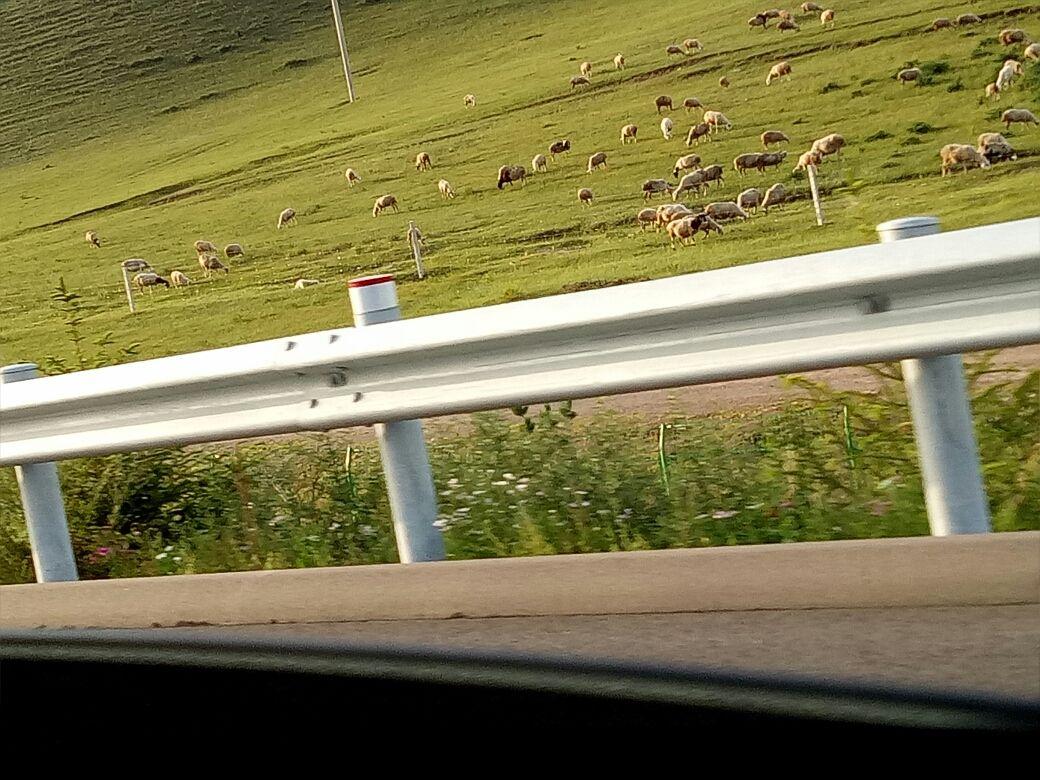 一场美梦班的旅行,丰宁坝上,美丽的草原